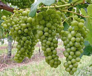 Ellenのおすすめ家飲みワイン 新緑シーズンに相応しいこの3本